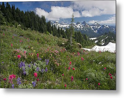 Mountain Meadow Metal Print by Bob Gibbons
