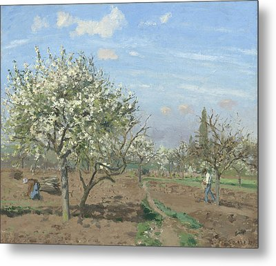 Orchard In Bloom Metal Print by Camille Pissarro