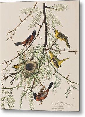 Orchard Oriole Metal Print by John James Audubon