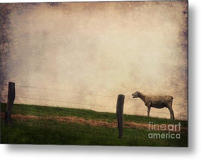 The Sheep Metal Print by Angela Doelling AD DESIGN Photo and PhotoArt