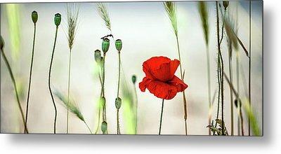 Summer Poppy Meadow Metal Print by Nailia Schwarz