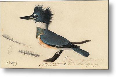 Belted Kingfisher Metal Print by John James Audubon