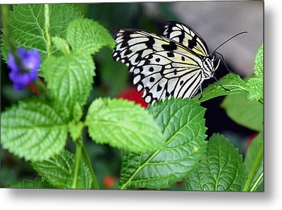 Paper Kite Butterfly No. 3 Metal Print by Sandy Taylor