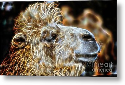 Camel Collection Metal Print by Marvin Blaine
