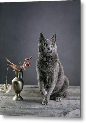 Russian Blue Cat Metal Print by Nailia Schwarz
