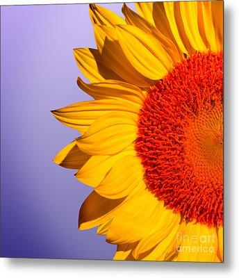 Sunflowers Metal Print by Mark Ashkenazi