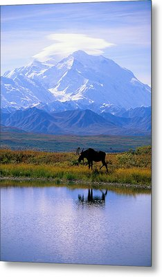 Denali National Park Metal Print by John Hyde - Printscapes
