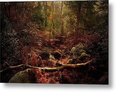 Fontainebleu Forest Metal Print by Olivier Blaise