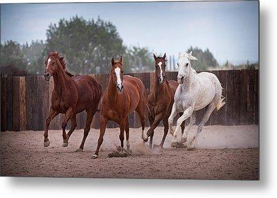 4 Horses Metal Print by Steve Gadomski