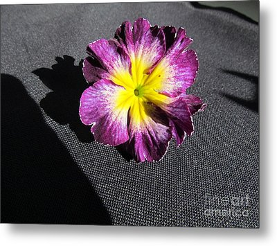 Pink Flower. Metal Print by Joyce Woodhouse