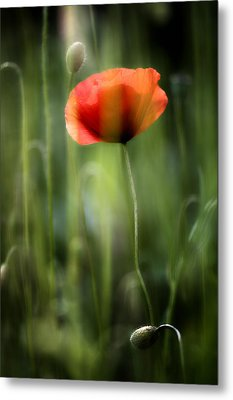 Poppy Metal Print by Silke Magino