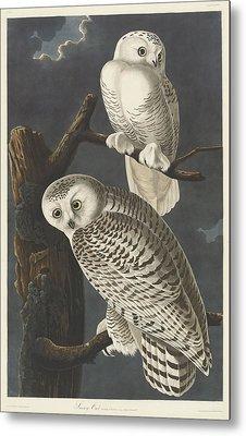 Snowy Owl Metal Print by John James Audubon