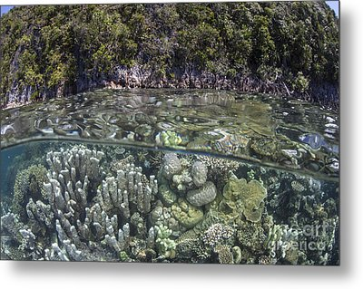 A Healthy Coral Reef Grows Metal Print by Ethan Daniels