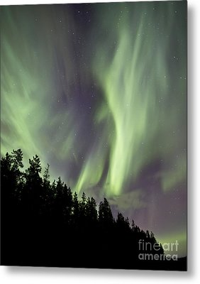 Aurora Borealis Over Trees, Yukon Metal Print by Jonathan Tucker