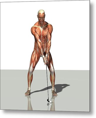 Male Muscles, Artwork Metal Print by Friedrich Saurer