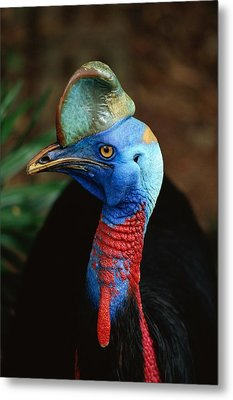 A Close View Of A Cassowary Metal Print by Tim Laman