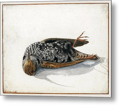 A Dead Starling Metal Print by Rochus van Veen