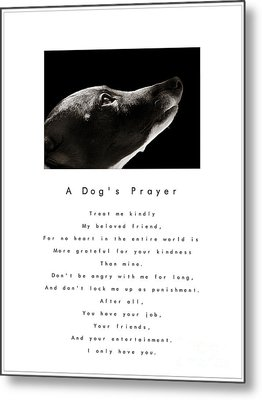 A Dog's Prayer - White Metal Print by Angela Rath