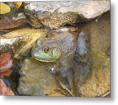 A Frog Of A Prince Metal Print by Patricia Lyons