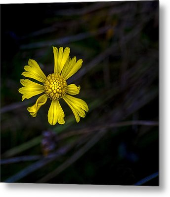 A Heart Of Gold Metal Print by Marvin Spates