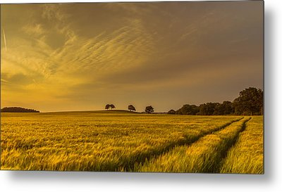 A Line In The Grass Metal Print by Chris Fletcher