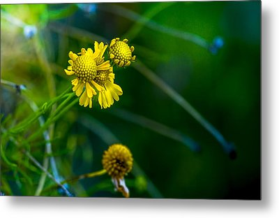 A Little Cheerfulness Metal Print by Marvin Spates