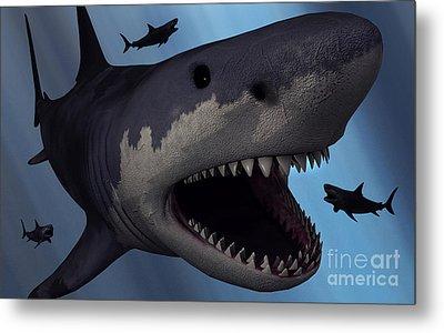A Megalodon Shark From The Cenozoic Era Metal Print by Mark Stevenson