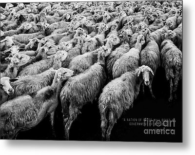 A Nation Of Sheep Metal Print by Edward Fielding