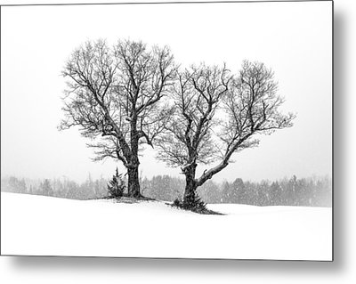 A Perfect Pair Metal Print by Shared Perspectives  Photography