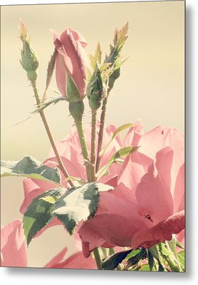 A Soft Sweet Note Metal Print by Amy Tyler