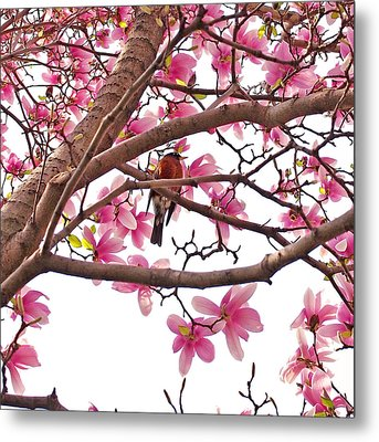 A Songbird In The Magnolia Tree - Square Metal Print by Rona Black