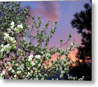 A Splendid Time Of Day Metal Print by Will Borden