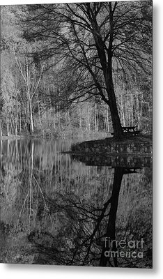 A Tree Of A Different Color Metal Print by Karol Livote