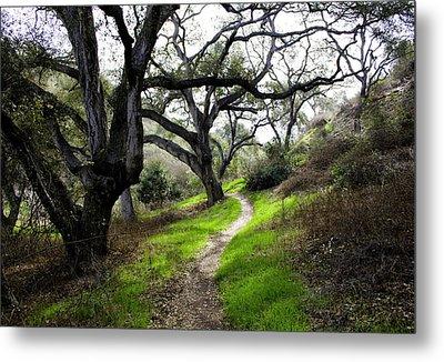 A Walk In The Woods Metal Print by Joe Darin