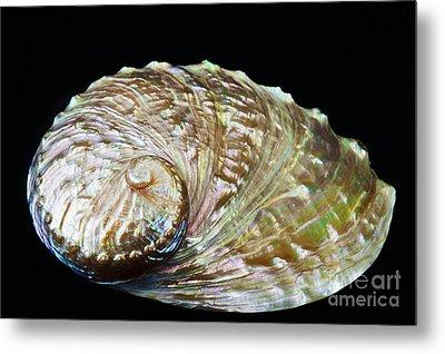 Abalone Shell Metal Print by Bill Brennan - Printscapes