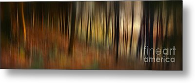 Autumn Forest Metal Print by Rod McLean