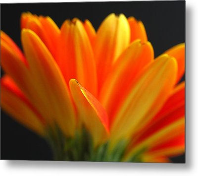 Abstract Gerbera Petals Metal Print by Juergen Roth