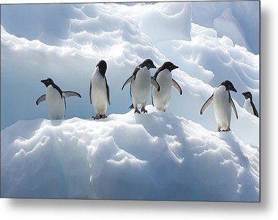 Adelie Penguins Lined Up On An Iceberg Metal Print by Tom Murphy