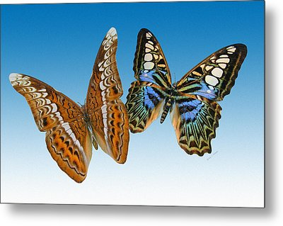 Admiral And Clipper Butterfly Metal Print by Betsy C Knapp
