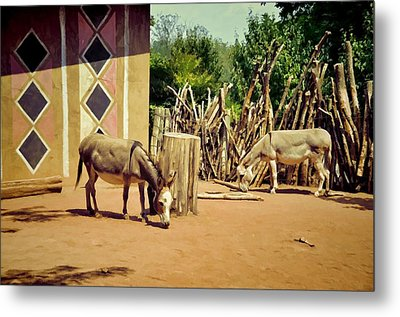 African Donkeys Metal Print by Jan Amiss Photography