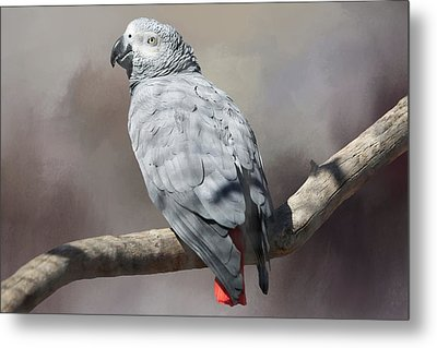 African Grey Parrot Metal Print by Donna Kennedy