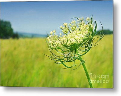 Against The Blue Sky Metal Print by Sandra Cunningham