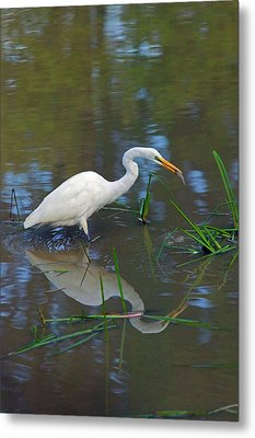 Ah... Breakfast Metal Print by Randall Ingalls