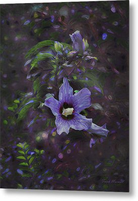 Happy Althea Metal Print by Frank Maxwell