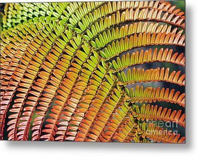 Amaumau Fern Frond Metal Print by Greg Vaughn - Printscapes