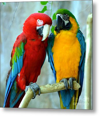 Amazon Parrots Metal Print by Dani Stites