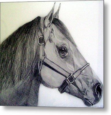 American Quarter Horse Metal Print by Gary Stull