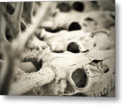 An Echo Of Mortality Metal Print by Rebecca Sherman