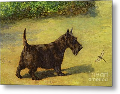 An Inquisitive Look Metal Print by Earl Maud
