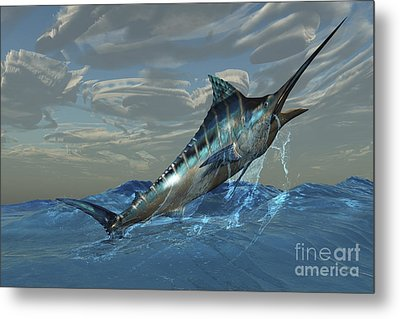 An Iridescent Blue Marlin Bursts Metal Print by Corey Ford